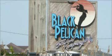 Black Pelican in Kitty Hawk