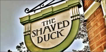 The Shaved Duck